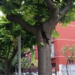 Viale Marconi, «Quel ramo sta per cedere, chi può intervenire?»