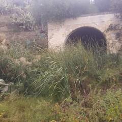 Ripulita la zona della fontana di San Ruggero