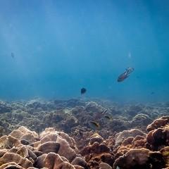 Le ricerche del biologo marino Walter Dellisanti