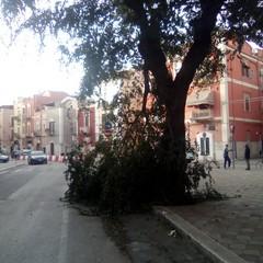 Albero caduto in via Roma