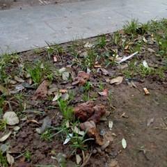 Deiezioni canine nei giardini De Nittis