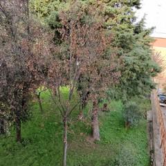 Alberi nei pressi della scuola Musti