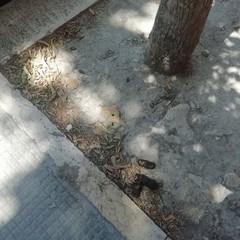 Deiezioni canine in viale Marconi