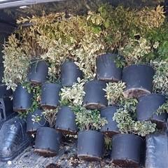 Donazione di piante