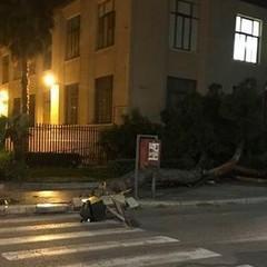 Albero caduto in via D'Aragona