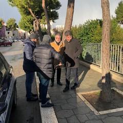 Albero caduto in piazza Castello
