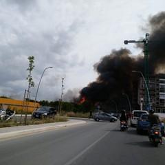 Incendio ai vivai in via vecchia Andria, è panico
