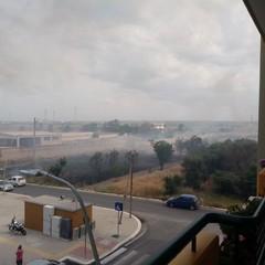 Incendio in via Vecchia Andria, a fuoco i vivai nella zona 167