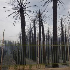 Incendio in via Vecchia Andria, panico tra i residenti