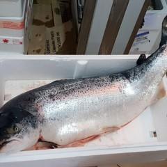 Oltre 160 kg di pesce donati dalla Capitaneria di Barletta alla Caritas