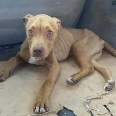 Cane in pericolo salvato sul ciglio della strada