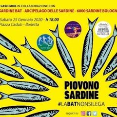 Sardine in piazza a Barletta