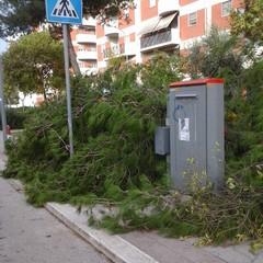 Albero caduto in via Barberini