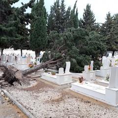 Albero caduto nel cimitero di Barletta