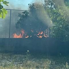 Sterpaglie in fiamme nei terreni tra Barletta e Trani