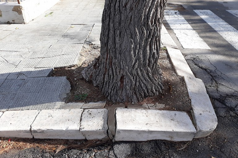 Pino in via Dimiccoli, marciapiede dissestato
