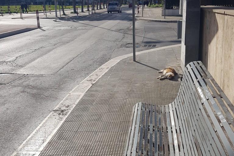 Gatto senza vita in via da Vinci