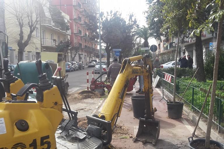 Verde pubblico, lavori in via Vitrani
