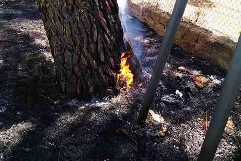 Pini a fuoco a Canne della Battaglia