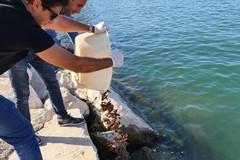 Pesca illegale di datteri di mare, attenzione alta sulle coste in zona Barletta