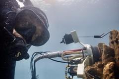 Ricercatore barlettano sviluppa un'innovativa tecnica per la valutazione dello stato di salute dei coralli