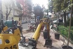 Verde pubblico, i pini di via Vitrani saranno sostituiti da arbusti di ligustri