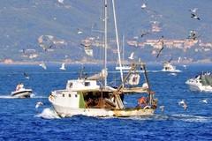 Fermo biologico, in arrivo nuovi fondi per le marinerie di Puglia