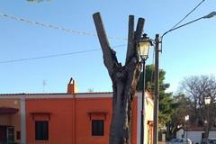 Potature non autorizzate a Montaltino, estraneo il Comune di Barletta