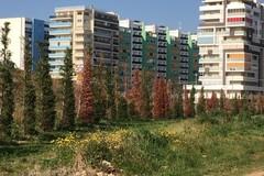 Caputo: «Il verde in città, questione di punti di vista»