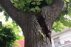 «Quel ramo sta per cedere, chi può intervenire?»