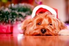 Capodanno, il decalogo per proteggere i vostri animali dai botti