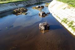 Abbandono selvaggio di rifiuti, Cianci: «Danno ambientale indelebile»
