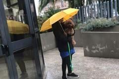 «Mia figlia fuori dai pubblici uffici perché il cane non può entrare»