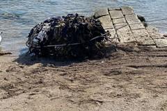 Pericolo ecologico alla foce del Ciappetta Camaggio