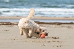 Cani in spiaggia, norme e opportunità: Barletta si adeguerà?