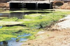 «Sarà pulito il mare oggi?», il quesito del M5S Barletta