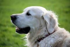 Lotta alle deiezioni canine, Barletta si affida alle guardie zoofile