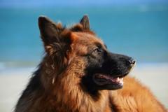 Barletta si doterà presto di un regolamento per la tutela del benessere degli animali