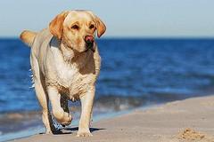 Aggredito dai cani sulla spiaggia di Ponente