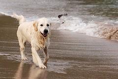 Paura a Ponente, «sono stata aggredita dai cani»