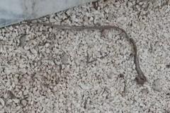 Gatti sazi e serpenti al Cimitero di Barletta, ai furti si aggiunge il degrado