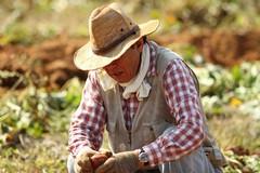 Lavori gravosi, pensione anticipata per pescatori e agricoltori