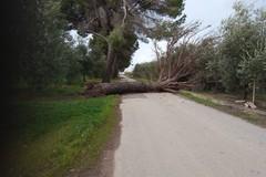 Forti raffiche di vento a Barletta, molti i disagi e gli interventi in città