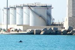 A chi giova la trivella petrolifera?