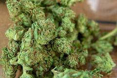 Piantagione di marijuana, i Carabinieri arrestano un agricoltore di Barletta