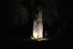 """""""En plein air - Menhir di Canne"""", l'installazione nel sito archeologico"""