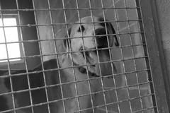 Un video contro l'abbandono degli animali: ecco la campagna di ENPA Bari-Barletta