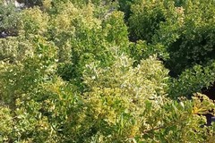 Una grande donazione di piante che abbelliranno Piazza Plebiscito
