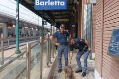 Salvata una cagnolina sui binari della stazione di Barletta