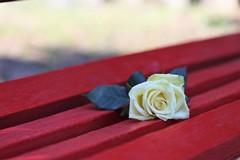 8 marzo, una panchina rossa nei giardini del castello di Barletta